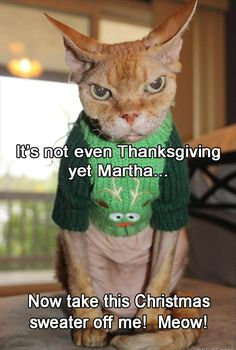 its-not-even-thanksgiving-yet-martha-take-this-christmas-sweater-off-me