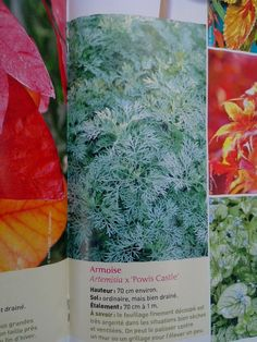 Compositions de callas et amaryllis dans les tons de for Amarylice fleuriste lyon