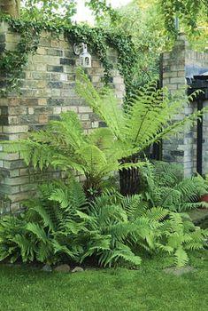 Alles wat je moet weten over varens in je tuin - LibelleFacebookPinterestWhatsAppEmailPrintFacebookPinterestWhatsAppEmailPrintFacebookPinterestEmailAddthis Tropical Garden, Tropical Plants, Shade Garden Plants, Tree Fern, Small Garden Design, Backyard Projects, Outdoor Plants, Dream Garden, Garden Planning