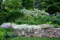 rock wall flowers