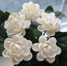 5 ark shell seashell flowers | by oceanbloomsnow