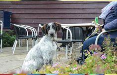 Open dag Dog Rescue Greece - Hart voor Dieren
