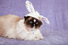 Easter cat  ❤ Upload you cat pictures at www.showmecats.com ❤ #showmecats #thefashionista #FunnyCats