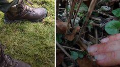 Tips og tricks og  tre gode råd til, hvad du ikke må gøre i haven i disse dage.