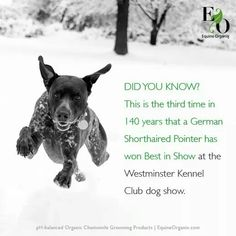 Fun Dog Fact Friday! German Shorthaired Pointer wins Best in Show at Westminster Kennel Club Dog Show.