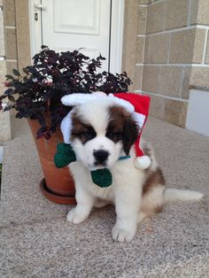 Felices Fiestas!  #Nano #riadearosa2 #petfriendly