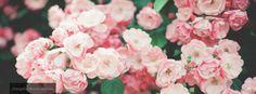 roses facebook cover