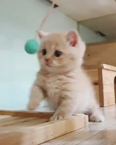 Cute Baby Cats, Cute Cat Gif, Cute Cats And Dogs, Cute Cats And Kittens, Cute Little Animals, Cute Funny Animals, Adorable Kittens, Ragdoll Kittens, Tabby Cats