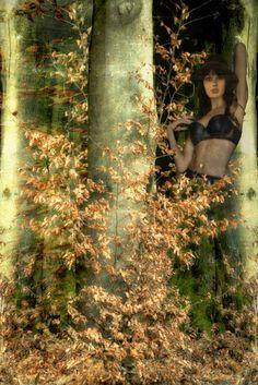Fata Morgana im Herbstwald