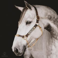 Hybrid Leather Halter – The Horse Education Company Equestrian Boots, Equestrian Outfits, Horse Head, Horse Tack, Leather Halter, Horse Names, Horse Halters, Tier Fotos, Horse Photography