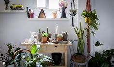 Cactus, suculentas y Tillandsias: las plantas perfectas para interiores | Conkansei.com