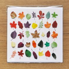 Greeting Card Fall