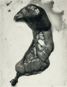 Chicken Parts - Frederick Sommer