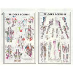 Trigger point guide to aid in placement of TENS pads  http://painshop.sevenportions.com