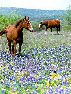 Spring in Texas :) I love horses!!!