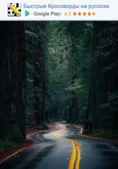 Redwoods in California Side Road, Back Road, Destination Voyage, Us National Parks, Nature Photos, Landscape Photography, Creative Photography, Amazing Photography, State Parks