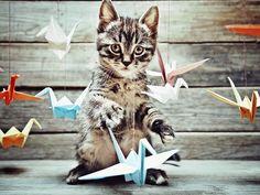 Treinando gatos para não atacar pássaros de estimação  | #CuidadosPets