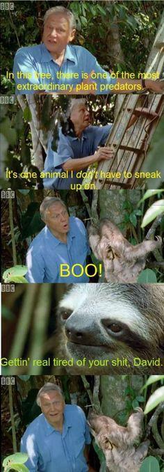 Sloth humor (20 photos)