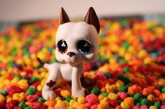 littlest pet shop great dane