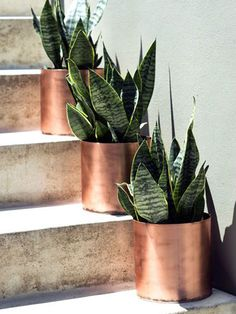 Sansevieria also called snake Plant & Mother-In Law's Tongue in copper pots. I love these plants! I would love to find the rosette ones, but so far haven't . Copper Planters, Copper Pots, Diy Planters, Modern Planters, Gold Planter, Copper Tub, Fall Planters, Planter Ideas, Concrete Planters