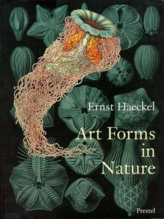Ernst Haeckel's biological drawings - Art Forms in Nature, design squish blog