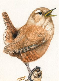 """""""House Wren"""" - Original Fine Art for Sale - © Rhonda Saylor-Wolf! Had to pin this, perfect example of the """"Wren"""" Precious my Cat brought In The House Today! Watercolor Bird, Watercolor Paintings, Watercolors, Bird Paintings, Bird Drawings, China Painting, Bird Pictures, Little Birds, Bird Art"""