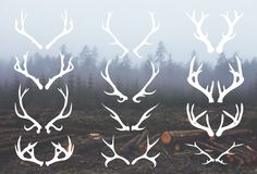 Deer Antlers - 12 Hand Drawn Vectors by cardcandy on Creative Market