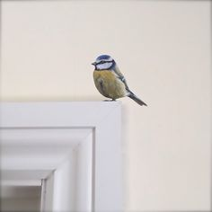 Image of Bertie Blue Tit ~ Removable/re-stickable wall decal. Vinyl Wall Stickers, Wall Decals, Blue Tit, Beams, Original Paintings, Sculptures, Sweet Home, Bird, Casserole