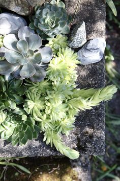 Sommerens blomsterbed Cabbage, Succulents, Vegetables, Plants, Cactus, Summer, Cabbages, Succulent Plants, Vegetable Recipes