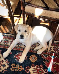 Slush Puppy, Trust Fund, Losing Friends, Old Money, Animal Kingdom, Hanging Out, I Can, Labrador Retriever, Waiting