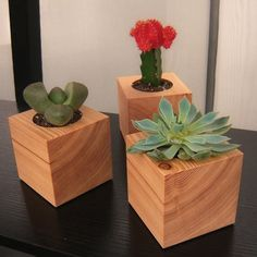 Three Succulent Garden Planters in Reclaimed by andrewsreclaimed, $35.00