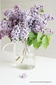 My grandmothers house had a stone wall in front of the meadow covered w lilacs. It was one of my absolute favorite things to see :)  | followpics.co