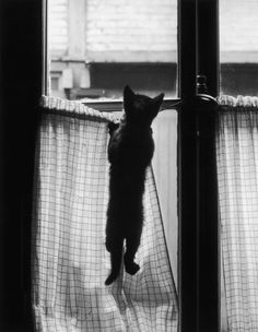 Kitty...bless it. somebody open the curtains for that baby!