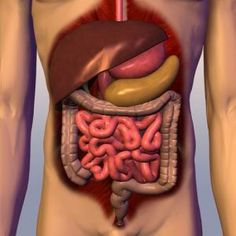 Anatomy and Physiology of Digestive System Nutrition Education, Rare Disease, Body Systems, Heartburn, Vitamins And Minerals, Human Body, The Best, Healing, Ethnic Recipes