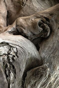 Gnarled Wood. I took some pictures like this in Richmond Park the other day, so beautiful and inspiring