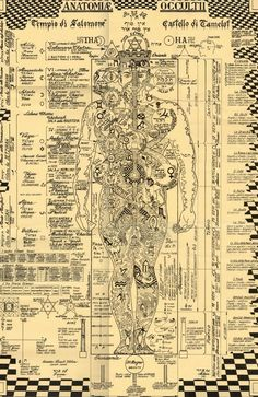 Tech Discover Der okkulten Anatomie-Druck Kabbalah Alchemie Baum des symbols italian The Occult Anatomy Print - Wiccan Magick Witchcraft Rose Croix Kundalini Les Chakras Yoga Chakras Human Body Art Occult Art Tantra, Alchemy Symbols, Ancient Symbols, Alchemy Art, Masonic Symbols, Welsh Symbols, Mayan Symbols, Viking Symbols, Egyptian Symbols