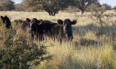 Claves para potenciar la ganadería del árido