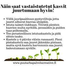 Hyvin istutettu ja oikein kasteltu kasvi juurtuu kunnolla, ja tuottaa sinulle iloa pitkään.