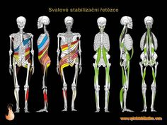 2 - Svalové řetězce Yoga Flow, Health Fitness, Spiral, Physiology, Physical Therapy, Anatomy, Health, Fitness, Health And Fitness