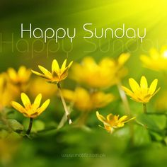 Yellow Happy Sunday Flowers sunday sunday quotes happy sunday sunday image quotes sunday wishes sunday greetings Sunday Morning Quotes, Sunday Wishes, Good Morning Happy Sunday, Happy Sunday Quotes, Sunday Love, Blessed Sunday, Sunny Sunday, Good Morning Messages, Good Morning Greetings