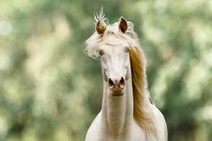 View topic - Kascade brumbies 2 - wild horse rp only - accepting ...