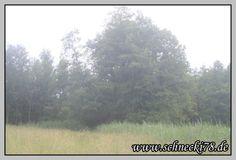 [Bilder des Monats Juni 2013] http://schnecki78.de/bilder-des-monats-juni-2013/#more-894