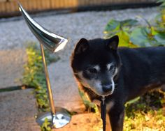 Shiba Inu and Italian Table Lamp  黒柴