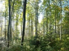 The FSC label guarantees that the trees that are harvested are replaced or allowed to regenerate naturally. (© FSC Czech Republic)