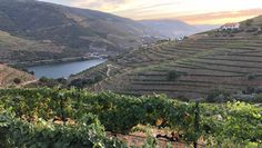 Exploring off-the-beaten-path places in Central and Northern Portugal - Travel Weekly 14-10-2020 | My first Covid-era spa treatment and a private, late-night visit to view Paleolithic rock drawings were just two of the unforgettable experiences as I wrapped up my two-week trek.