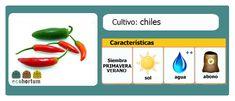 Picante, picantísimo... cultiva chiles en tu huerto en casa:  http://ecohortum.com/como-cultivar-chiles/