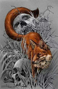 Fox and the skull
