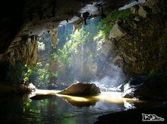 O Parque Estadual Turístico do Alto Ribeira (PETAR), área de Mata Atlântica em…