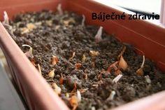 Návod ako si doma vypestovať nekonečné množstvo nepostrekovaného cesnaku. - Báječné zdravie How To Dry Basil, Gardening Tips, Herbs, Food, Compost, Balcony, Essen, Herb, Meals