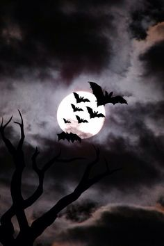 Halloween is almost here.To get in the Halloween mood, we are posting 30 spooky and scary free Halloween wallpapers that you can use for your desktops. Halloween Bats, Halloween Pictures, Holidays Halloween, Halloween Decorations, Happy Halloween, Halloween Sayings, Spooky Pictures, Halloween Window, Halloween Tricks